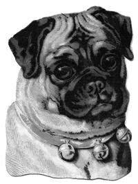 pug+vintage+image--graphicsfairy009b