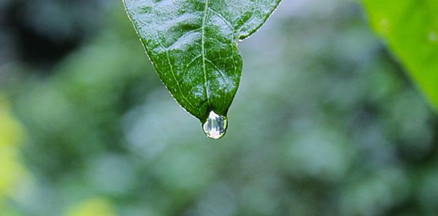 early-spring-rainstorm