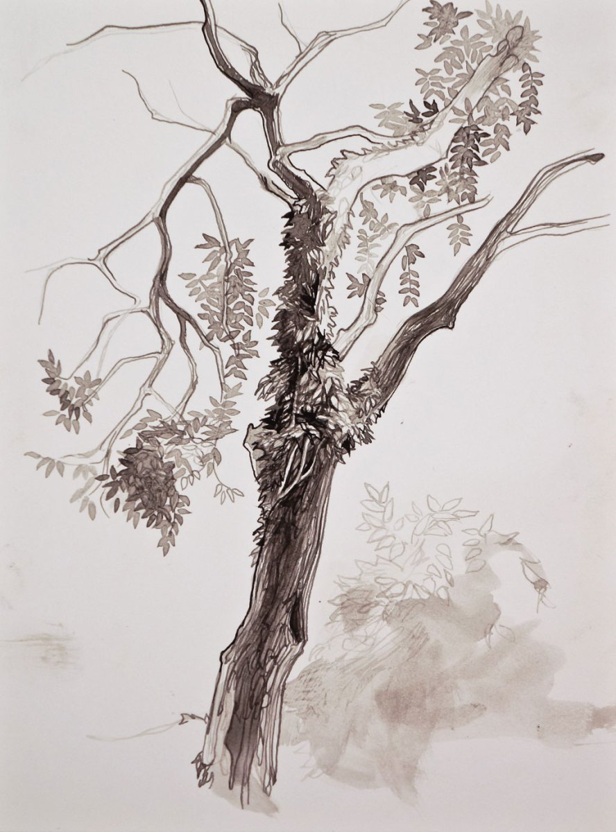 WHY DRAW TREES by Laurel Hooker