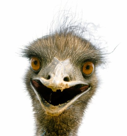 Emu-on-the-Loose