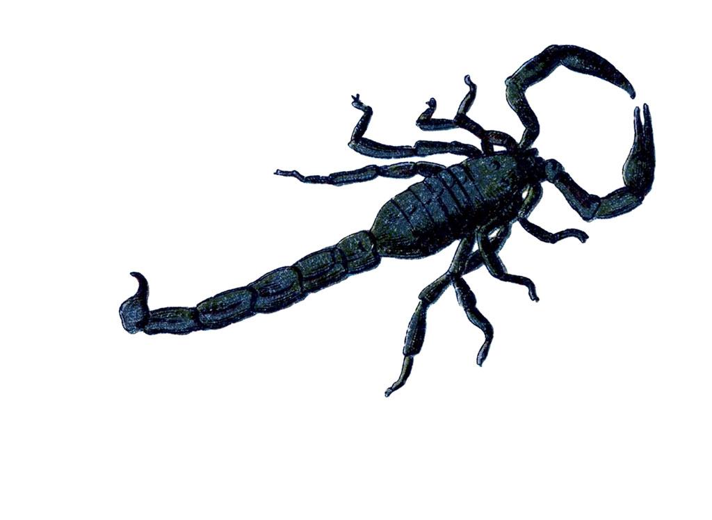 The-Scorpion