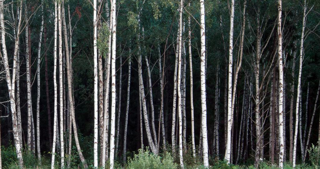 Birch-Waters