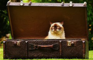 Cleeve Cats cattery what to bring