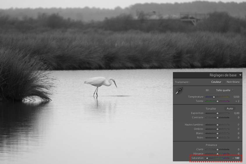Conversion d'une photo en noir et blanc dans Lightroom