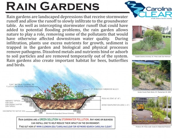 rain garden plants south carolina Rain Gardens | College of Agriculture, Forestry and Life