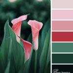 Pink Chalice colour scheme from Clever Chameleon