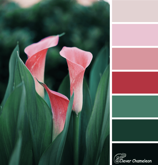 Pink Chalice color scheme by Clever Chameleon