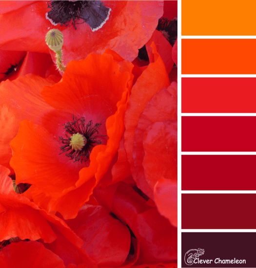 Flanders Poppy colour scheme from Clever Chameleon