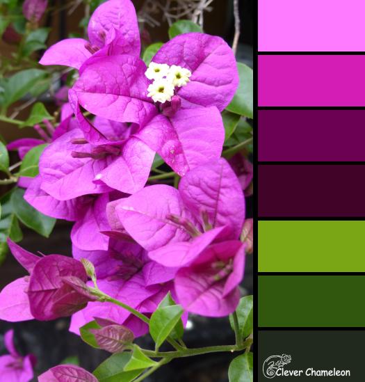 Purple Bougainvillea color scheme from Clever Chameleon