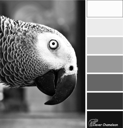 black and white parrot color scheme by Clever Chameleon