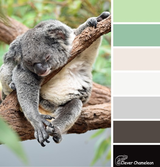 Tired Teddy colour scheme by Clever Chameleon