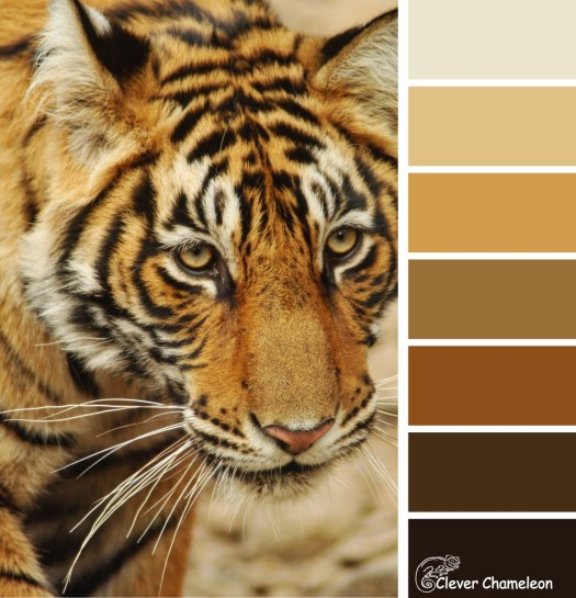 Tiger colour scheme from Clever Chameleon