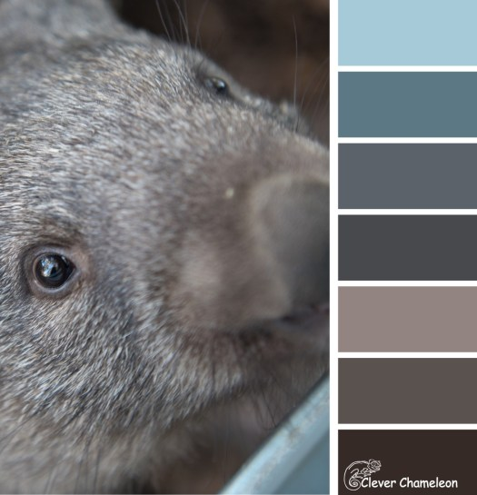 Wombat Scoop colour scheme by Clever Chameleon