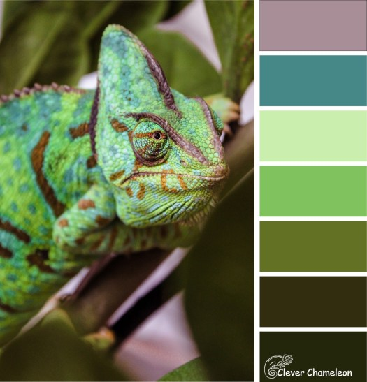 Chameleon Capers colour board at Clever Chameleon