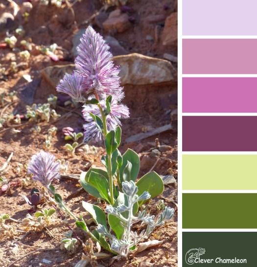 Mulla Mulla flower colour board at Clever Chameleon
