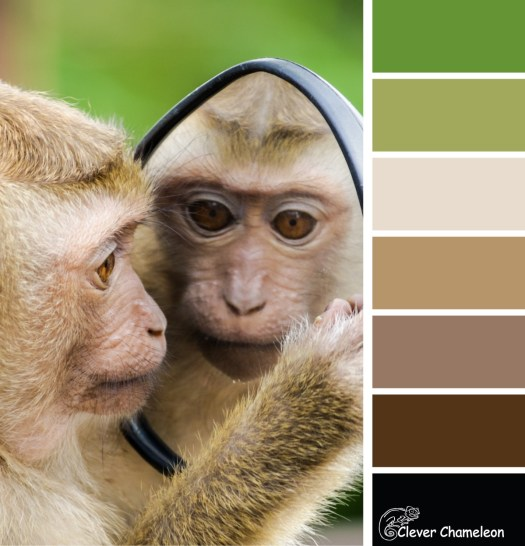 Monkey in the mirror colour board at Clever Chameleon