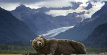 Bears Doing People Things: Paint me like one of your French girls
