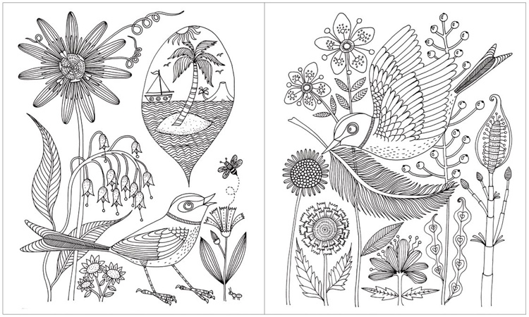 Avian Friends Coloring Book