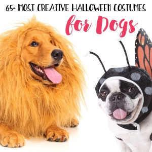 65+ Most Creative Dog Costumes for Halloween