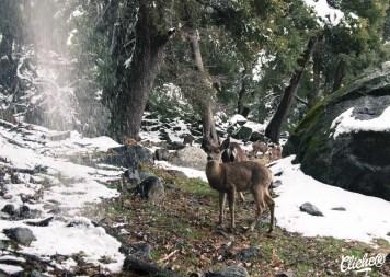 Yosemite national park - USA CLICHE®-9