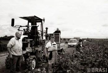 Vendange bourgogne - domaine desaunay bissey