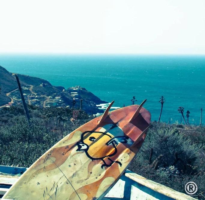 Wild Bird - Mexique - 2013