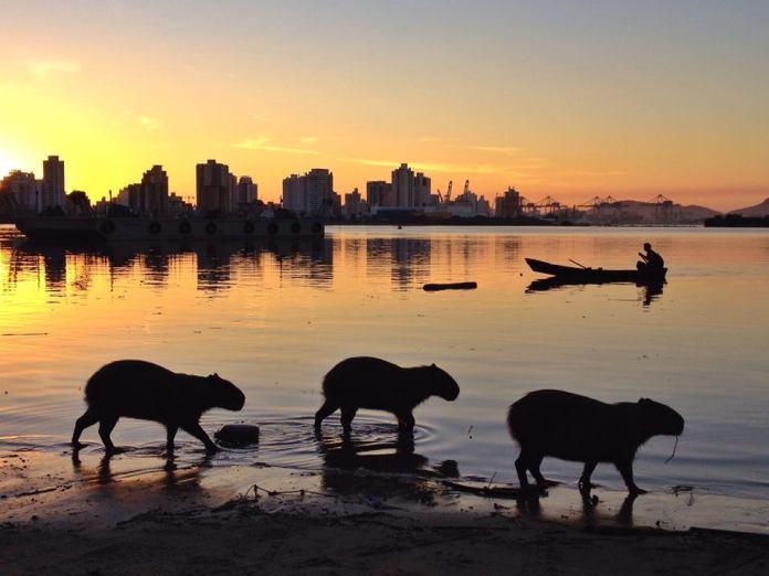 sunset no rio itajai-açu