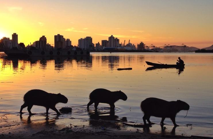 sunset no rio itajai açu