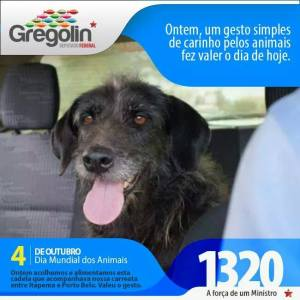 gregolina