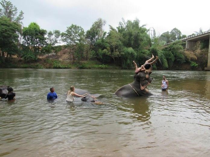 Banho com elefantes na Tailândia