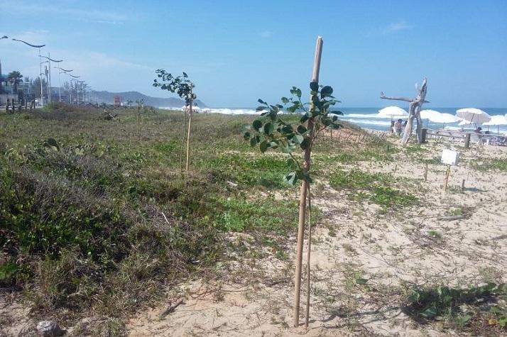 Restinga da Praia Brava recebe plantio de espécies nativas