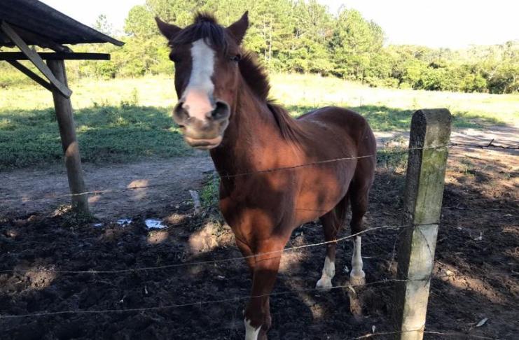 Cavalos estão disponíveis para adoção na UAPA