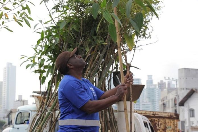 Cerca de 140 mudas de árvores foram plantadas na 4ª Avenida