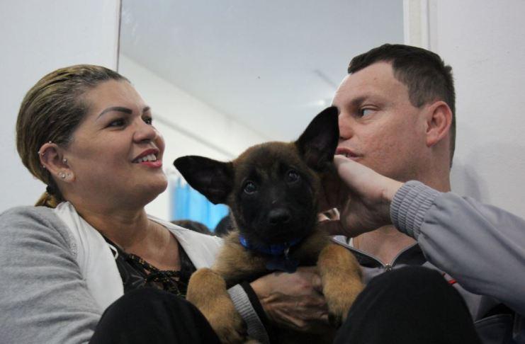 Guarda Municipal inicia treinamento com novos cães do K9