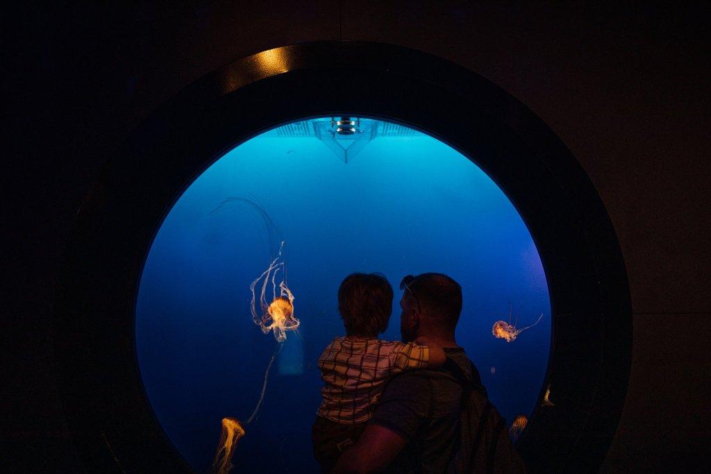 Watching Jellyfish