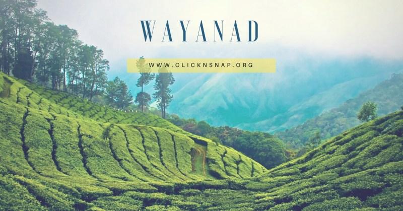 wayanad, monsoon, bangalore, travel, Rain, Tour