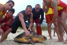 Tartaruga estava presa em rede de espinhel e foi resgatada próximo ao posto de guarda-vidas na Praia Brava-Divulgação