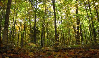 Forest Ecosystem Vulnerability Assessments Usda Climate Hubs