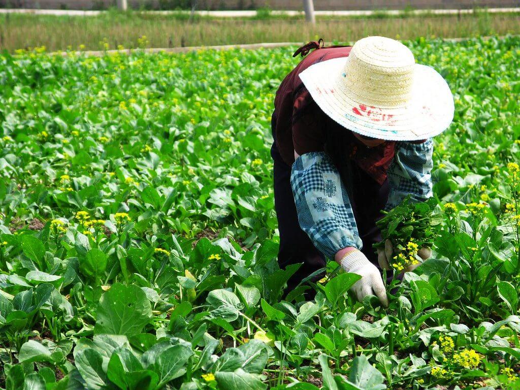 China Leads Green Jobs in Renewable Energy Sector / 国在可再生能源领域引领绿色就业潮流