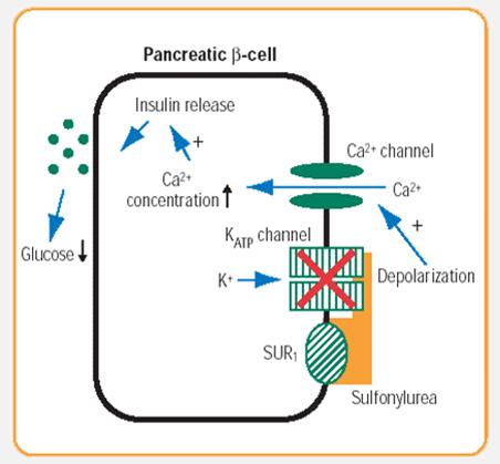 mekanisme obat golongan steroid