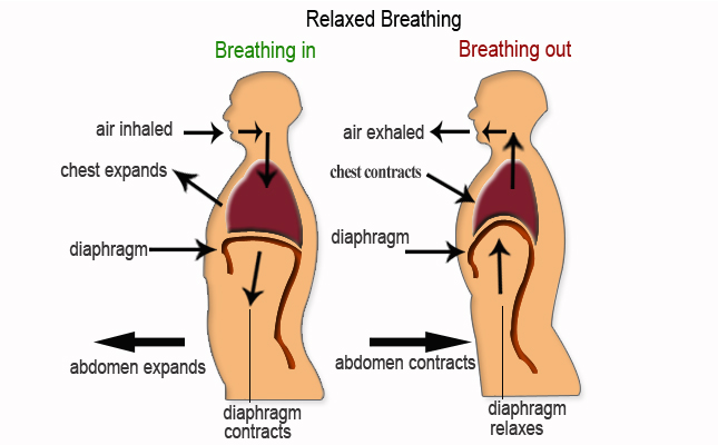 Image result for breathing