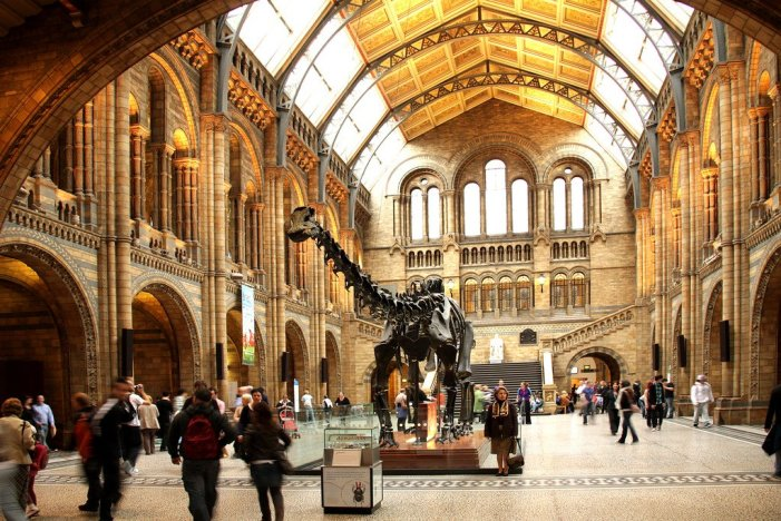 London Museums National History Museum