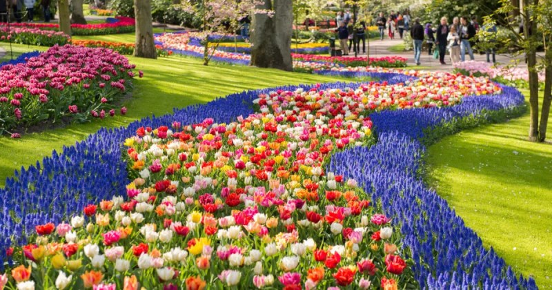 Keukenhof Gardens Must Visit Places / Things to do during the Tulip Festival in Amsterdam and beyond Clink Hostles