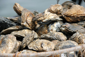 oysters-in-basket