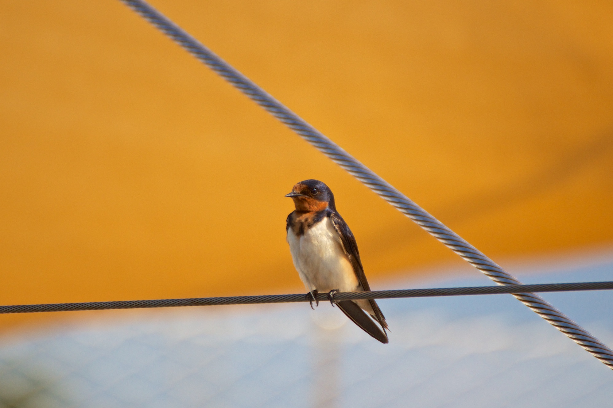 Bird on a Wire and Harnesses
