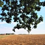 application visorando pour randonner autour de Paris champ agricole