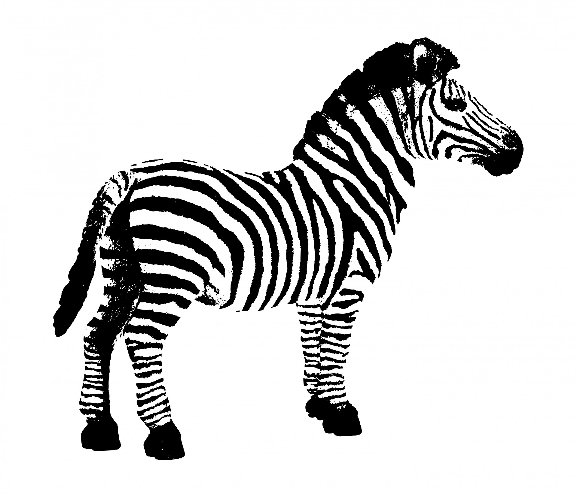 Zebra Background