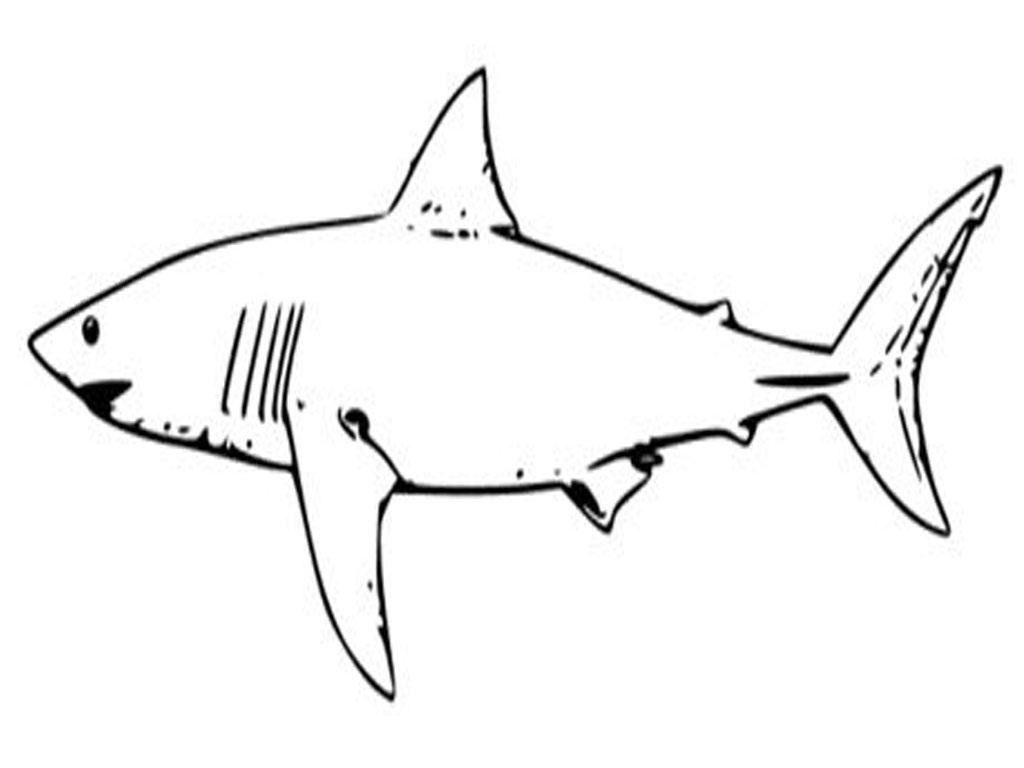 Shark Template Printable