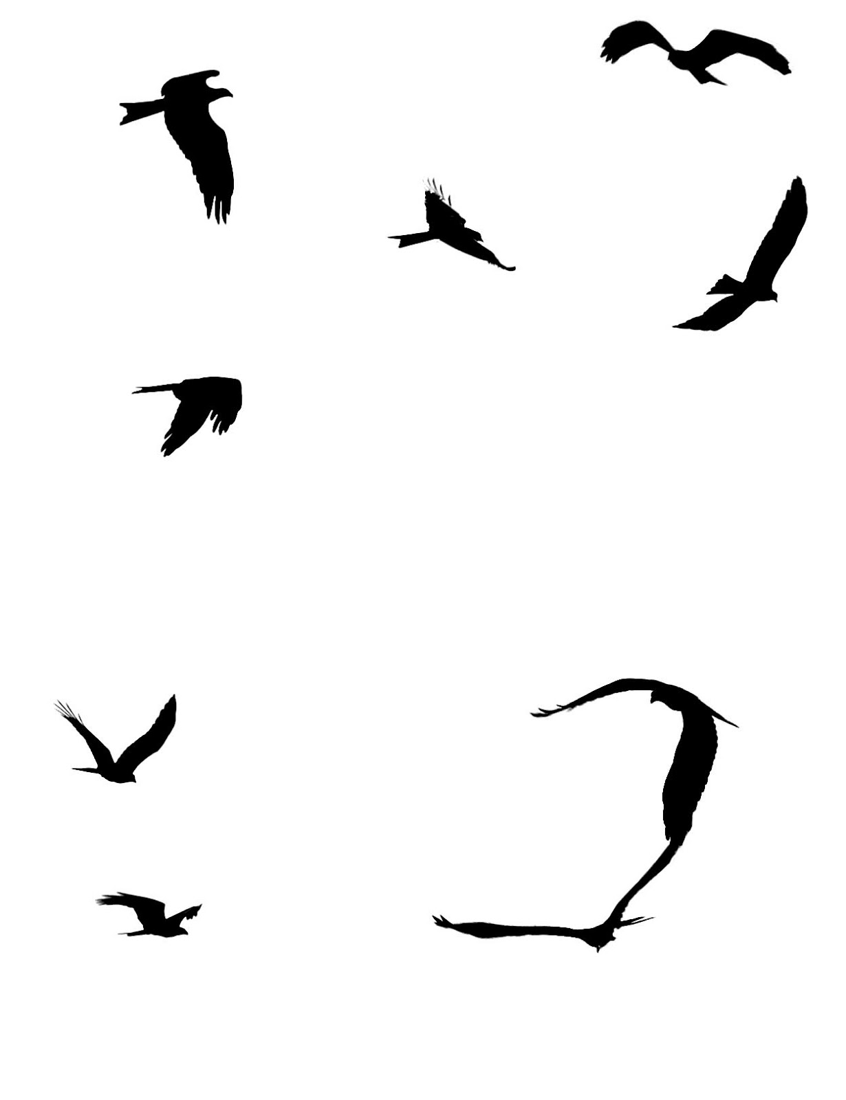 Silhouette Birds Flying