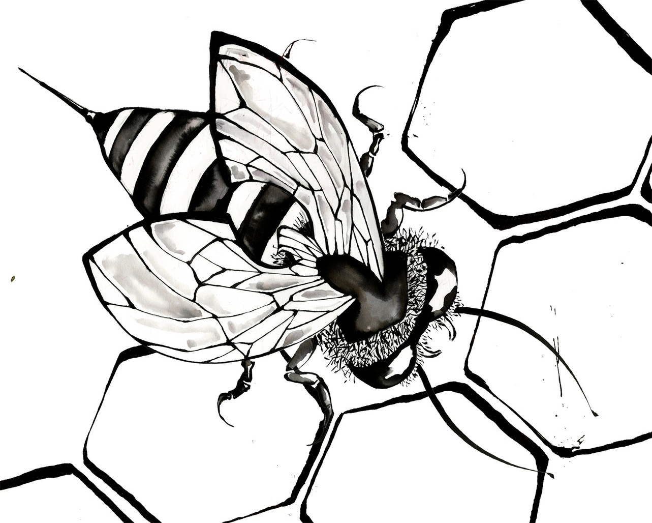 Bee Line Drawing